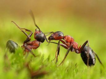 hormigas-trabajando-1