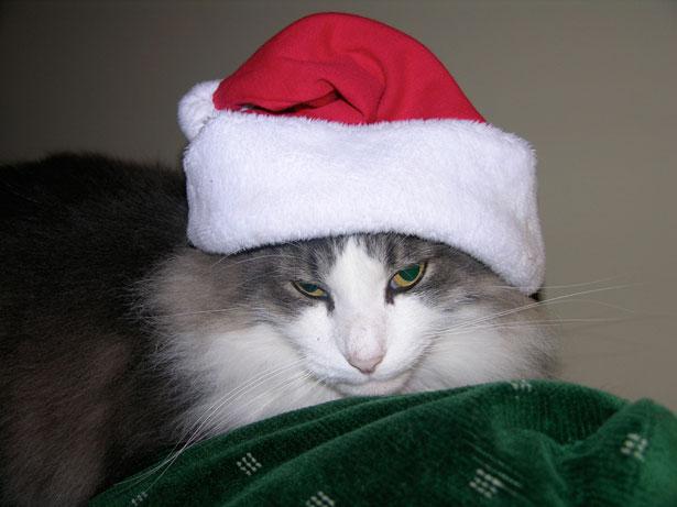 my-cat-hates-xmas
